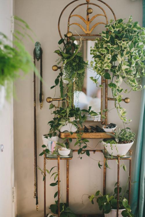 mini bašta, sobne biljke koje pročišćavaju vazduh